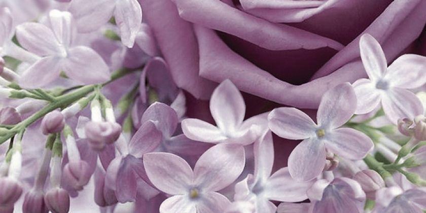 Роза фиолетовый 2 25x50