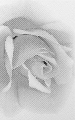 Камелия черн 02 Декор 25x40